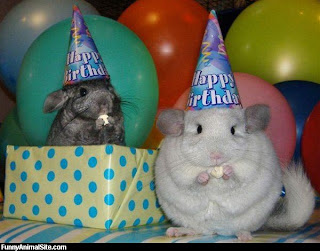 funny animals happy birthday funny animals happy birthday funny
