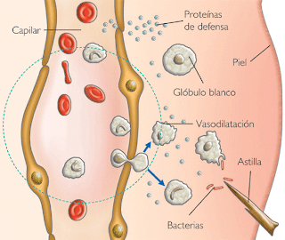 Patología inflamatoria