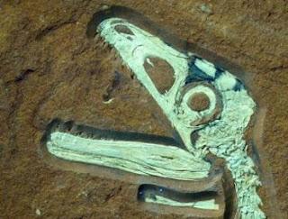 Fosil Dinasaurus