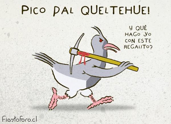 Pico pal Queltehue