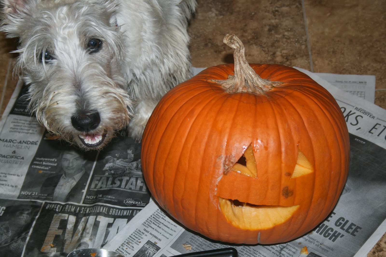 scottie and jack o lantern