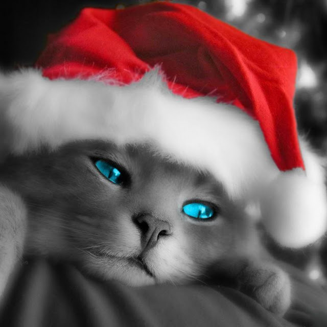 Christmas cat iPad wallpaper