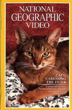 Cats: Caressing the Tiger (1991)