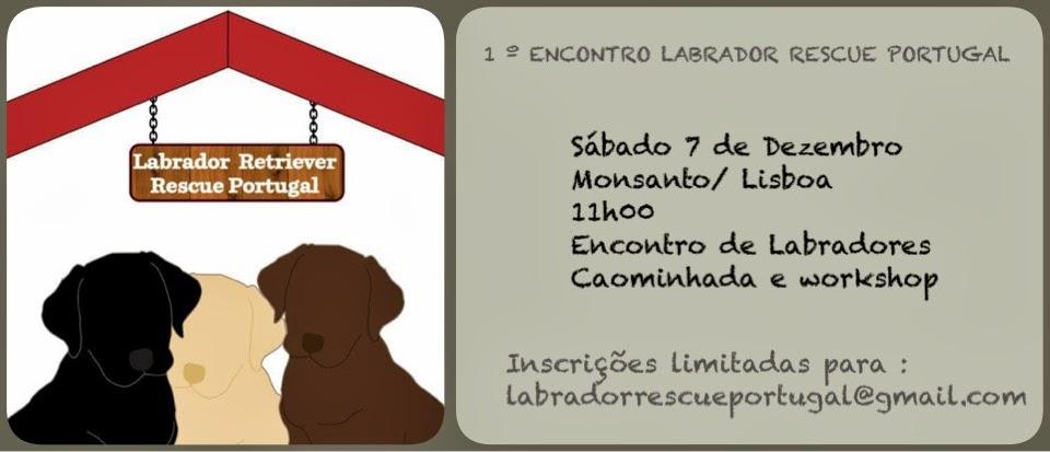 1º ENCONTRO LABRADOR RESCUE