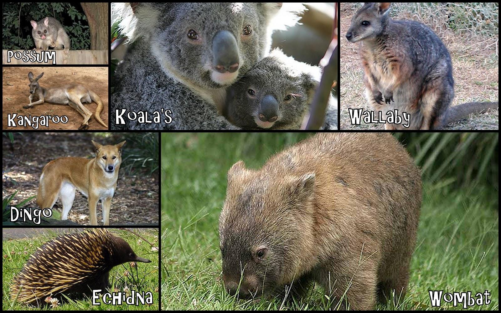 What animals in Australia
