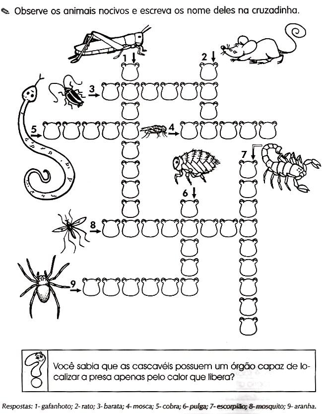 Desenhos Preto e Branco Cruzadinhas animais e insetos Colorir