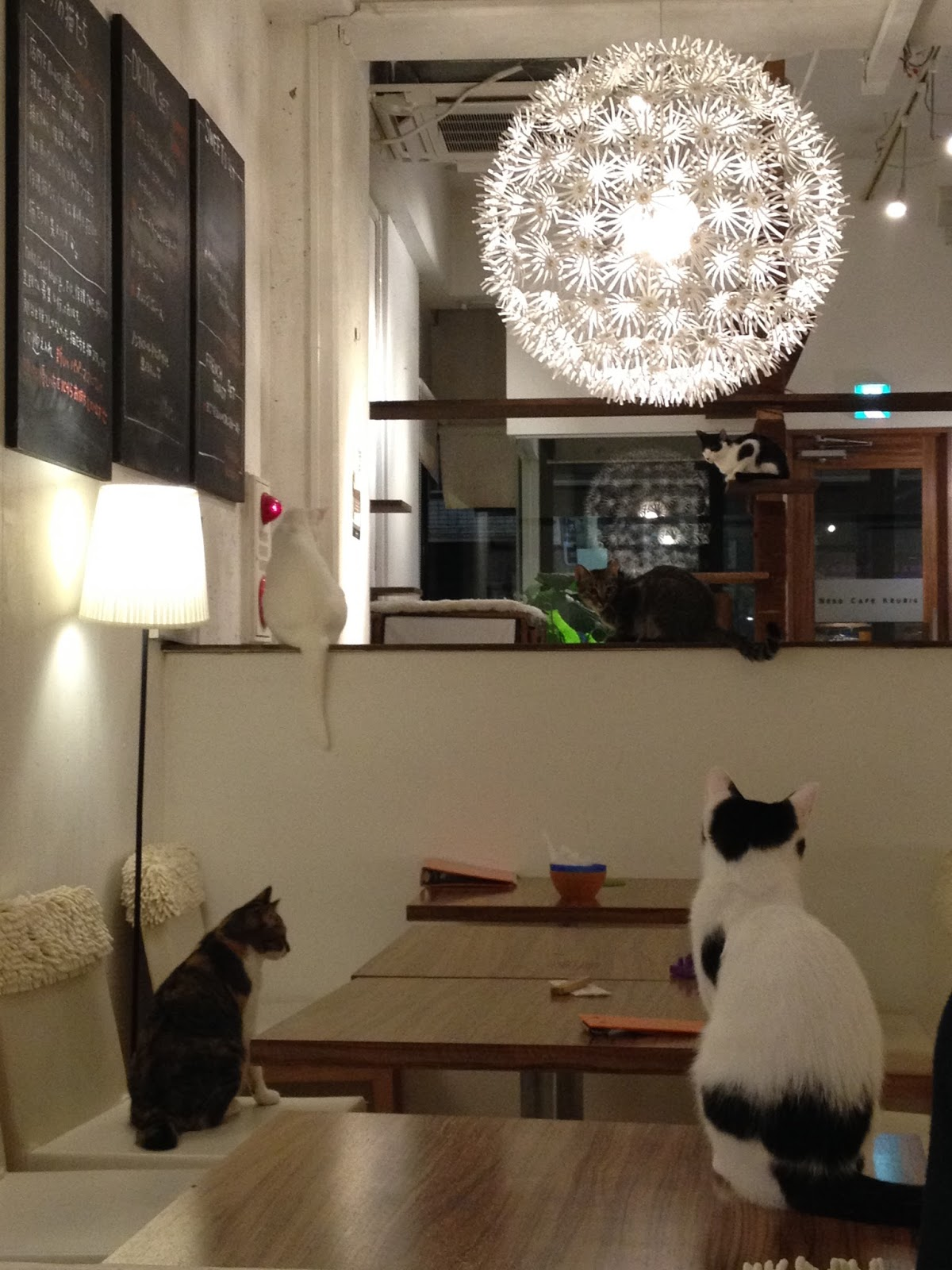 Cat Cafes Seem To Be All The Rage Recently Arently First One Started In Taiwan Back 1998 But Really Caught On An And As A Result Many