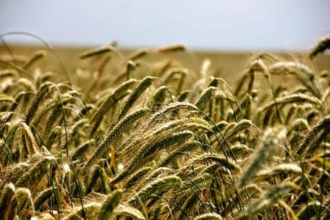 Finanziamenti Agricoltura