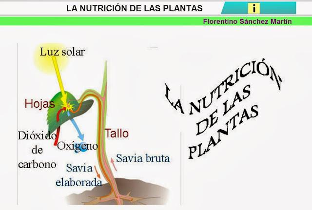 http://cplosangeles.juntaextremadura.net/web/edilim/curso_4/cmedio/las_plantas/la_nutricion/la_nutricion.html