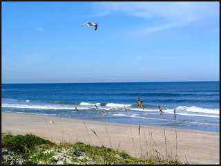 Beach at Canaveral National Seashore