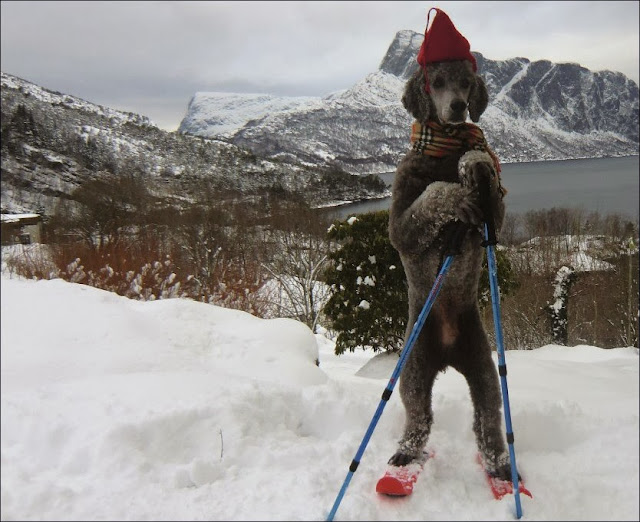 Funny animals of the week - 20 December 2013 (40 pics), dog wears skiing gears