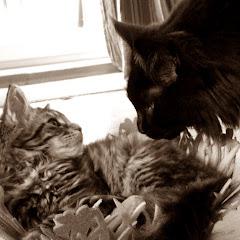 Loki & Lumpi