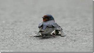 Inilah Pasangan Burung Yang Membuat Ramai Orang Di Dunia Menangis