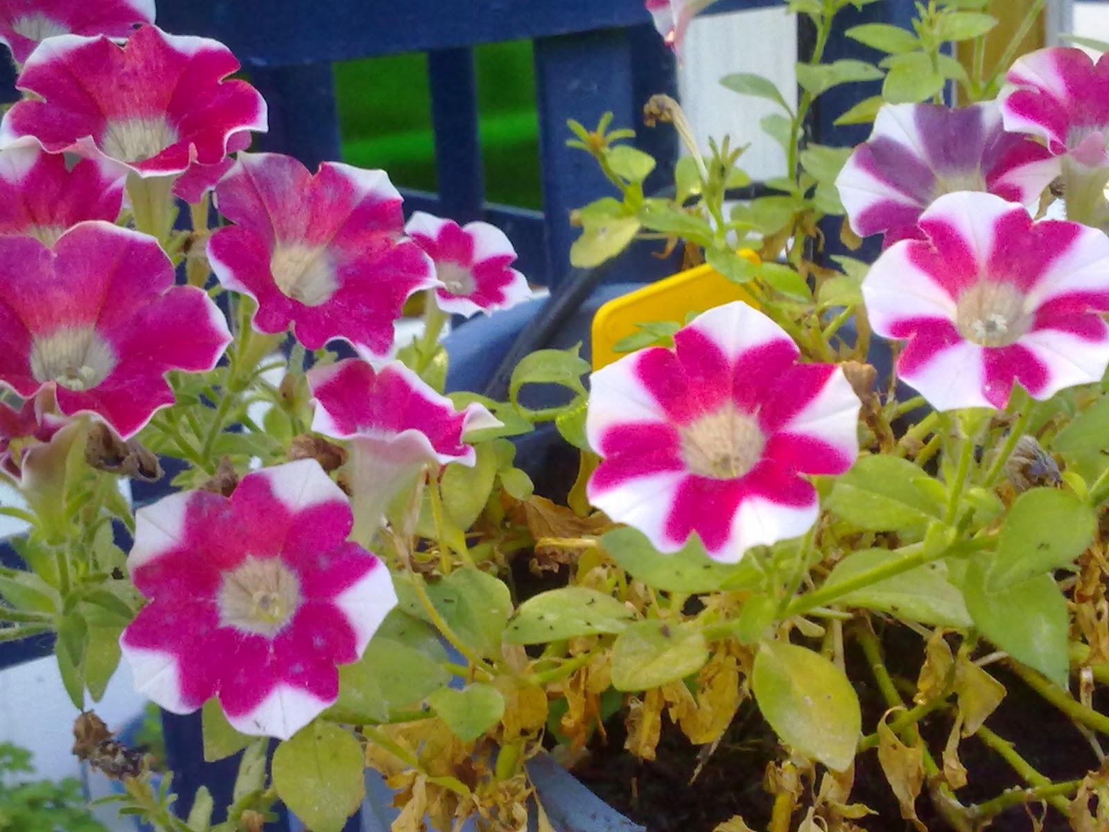 Uruguay natural internacional chacra lxxxv jardin - Plantas de temporada primavera ...