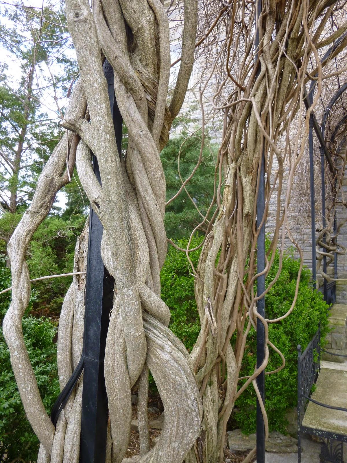Garden Of Aaron Cheekwood Botanical Garden In Spring