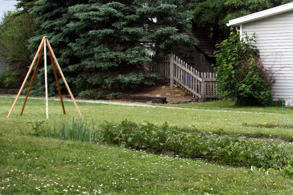 Home Vegetable Garden in June - Potato Patch