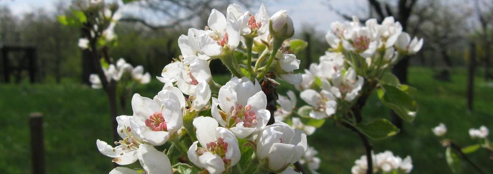 doğa harikası çiçekler