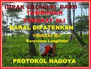 Nagoya Protokol,Tumbuhan Tongkat Ali Eurycoma Longifolia dipatenkan,Nu-Prep SUDAH TERJAMIN PATENNYA