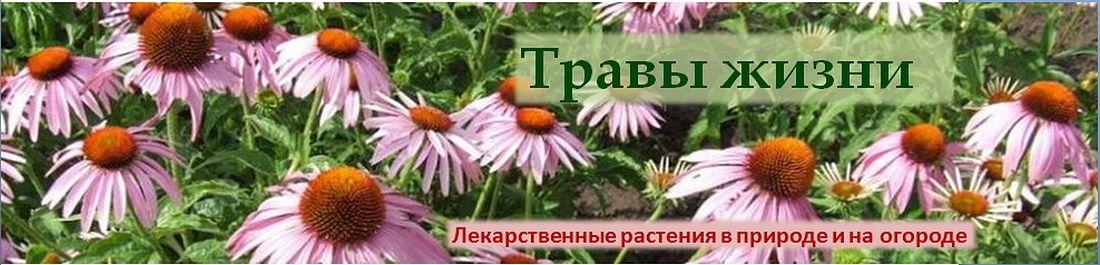 Травы жизни