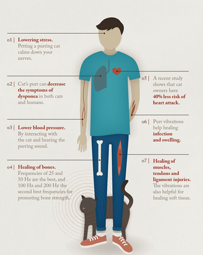 The Healing Power of Pets - They Prevent Allergies, Reduce Heart Attack Risk and Lower Blood Pressure