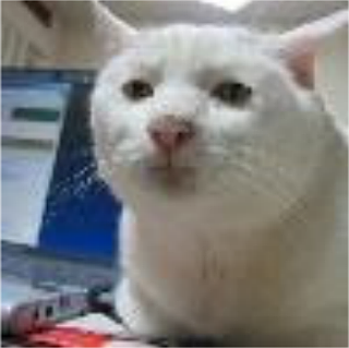 InfoBarrel's avatar of Admin (aka SRS cat)