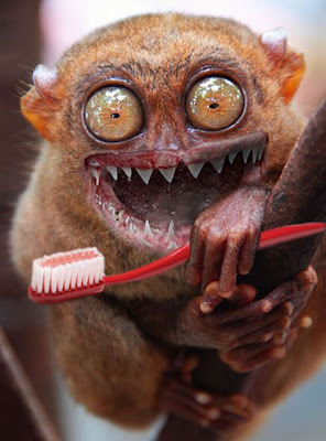 Image of: Endangered Australian Tarseir Weird Pictures Of Animals Weird Endangered Animals Weird Urinals Cute Weird Pictures Of Creaturescute Tarsier Photo Cute Tarsier Vector Online News Icon Funny Cute Tarsier Weird Online News Icon
