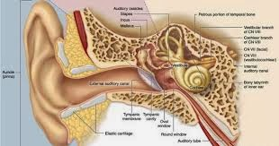 Hearing Loss - Getting Rid of Bilateral and Unilateral Tinnitus