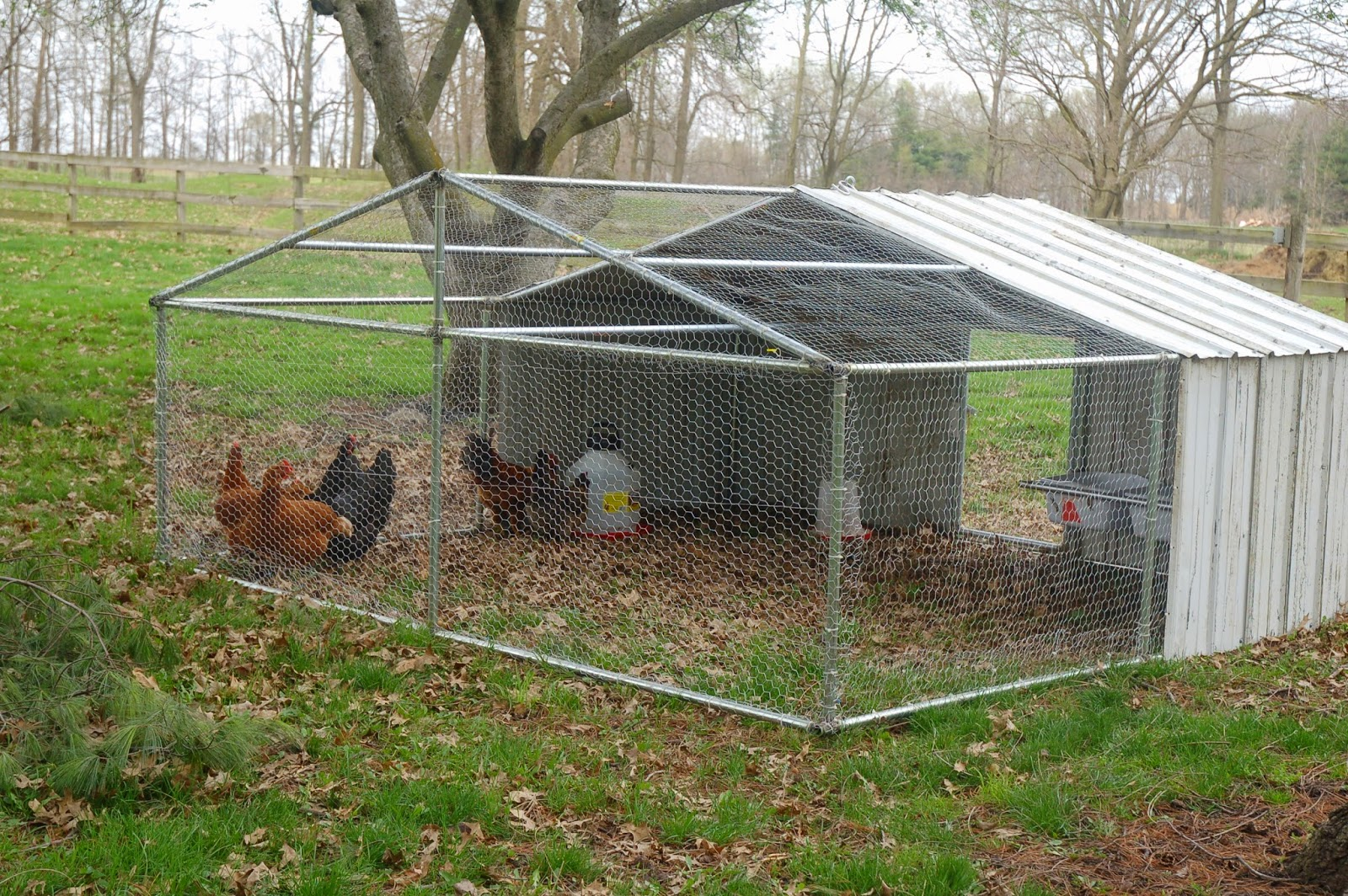 Shortiesfunnyfarm chicken tractor big time for Big chicken tractor