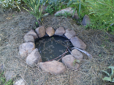 Purple pear farm permaculture in action a frog pond for Small frog pond ideas