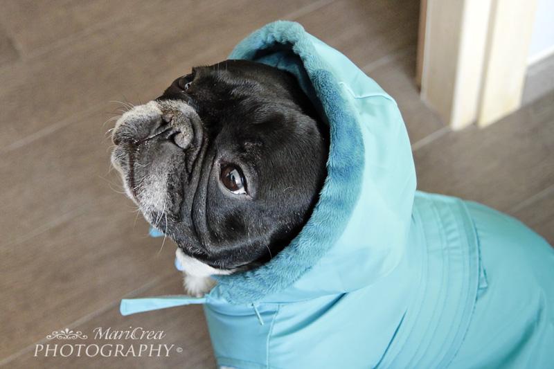 cappottino per il cane