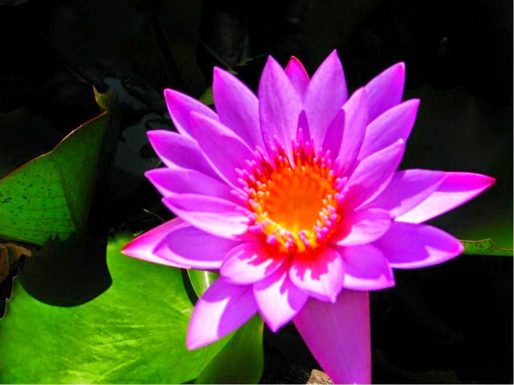 Color, Violeta Imágenes gratis en Pixabay - Imagenes De Flores De Violetas
