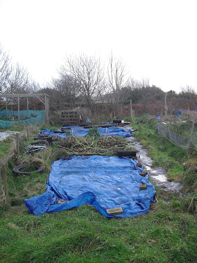 The new allotment