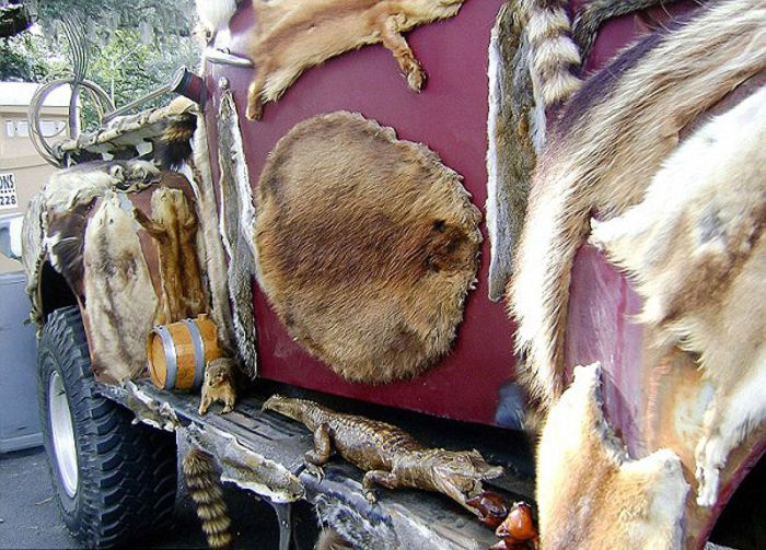 Wtf Taxidermy Truck Cool Damn Pictures