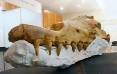 Peru discovers 40 million year old whale fossils in desert