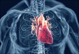 5 Penyakit yang menyerang pada jantung