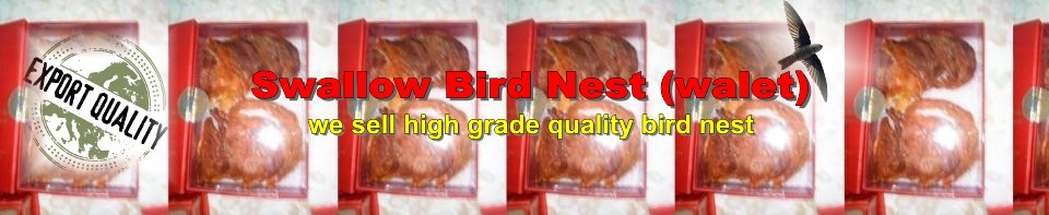 Swallow Bird Nest - Walet