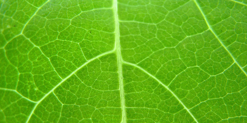 15+ Free Leaf Green Brown Textures Download