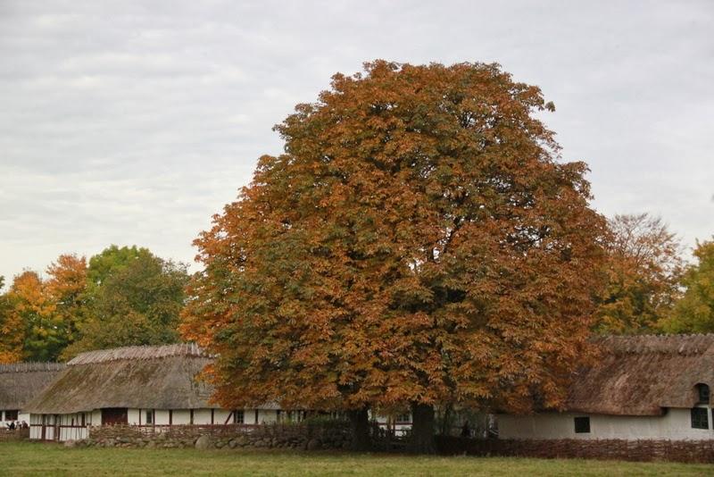 værnetræ
