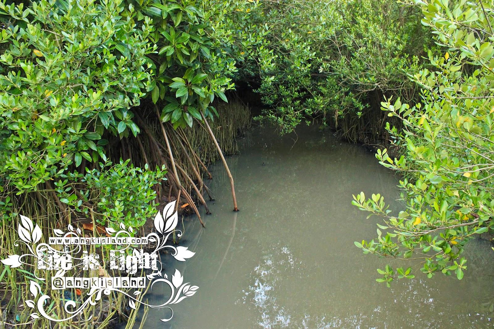 akar hutan bakau jogja