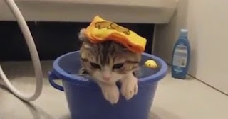 Весёлая видеоподборка кошки и вода (water+cats)
