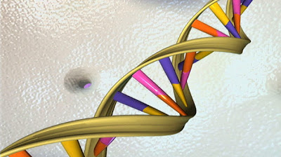 Scientists discover DNA body clock  DNAdoublehelix-publicdomain