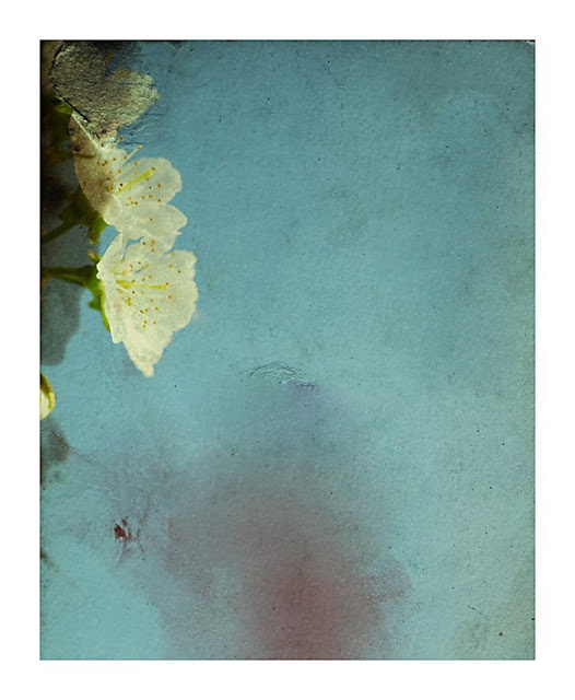 Jetty Kolobaric - Blossom Melancholy 2