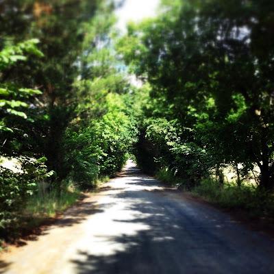 tree lined country lane in victoria australia travel adventure