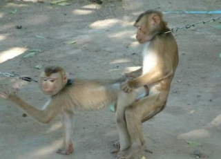 funny picture: monkey s*x