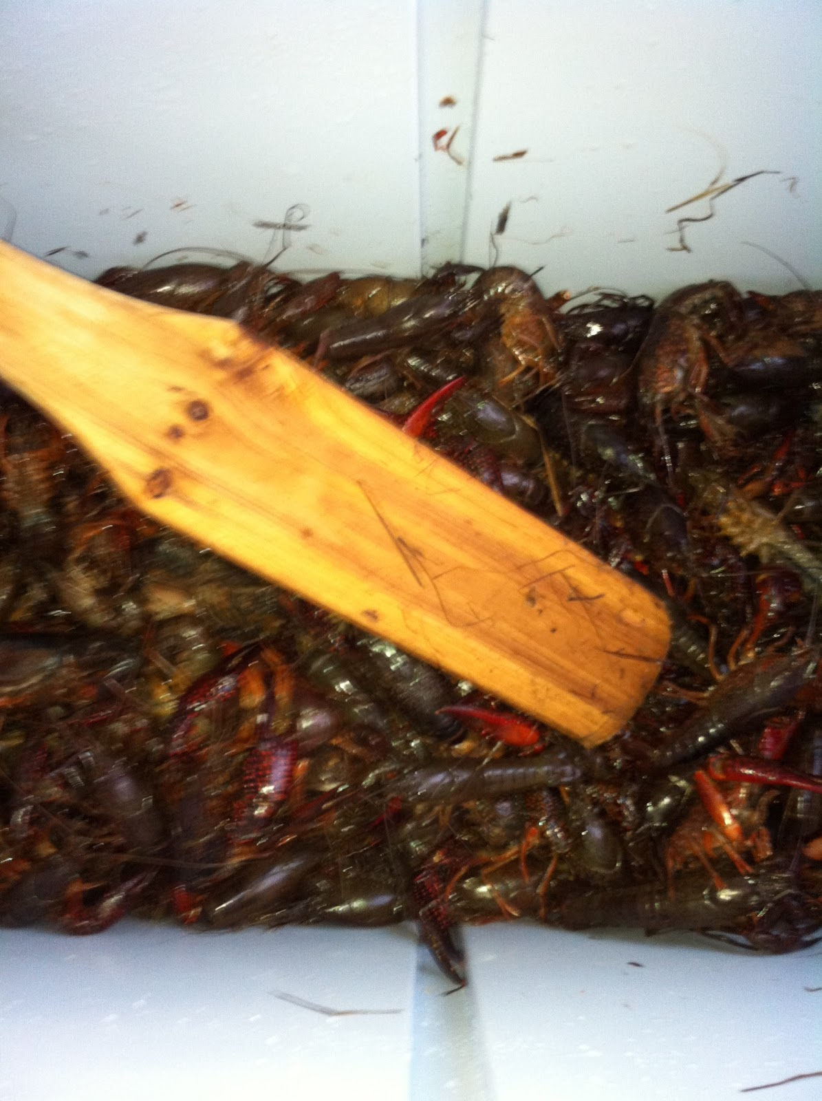 the uptown acorn crawfish is king