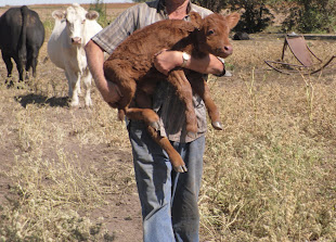"Shepherd carrying his ""sheep"""