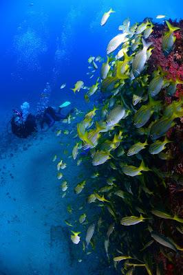 Diana teran fotos fant sticas del fondo del mar peces - Diana de colores ...