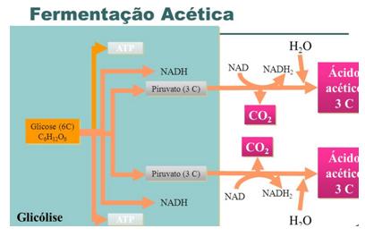 09. Metabolismo de Carboidratos.pdf