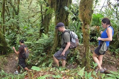 Senderismo por la selva en Costa Rica
