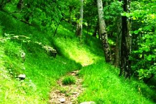 Vista de un tramo boscoso en la ascensión al Priena